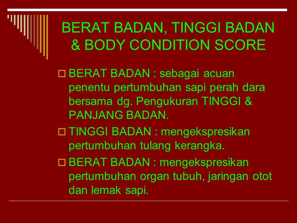 BODY CONDITION SCORE SAPI PERAH DARA  BSC dapat merefleksikan status manajemen pakan pada sapi perah.