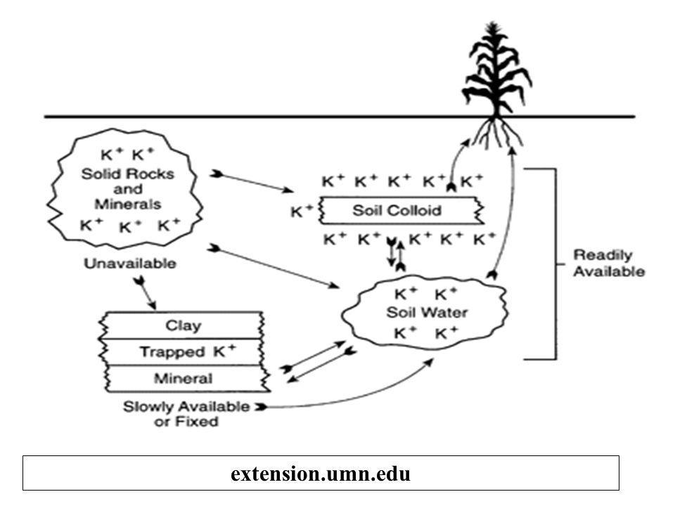 Efek Pupuk K terhadap K-tanah K-larutan tanah pH: 4.1 pH: 5.1 pH: 6.5 pH: 7.0 Dosis pupuk K