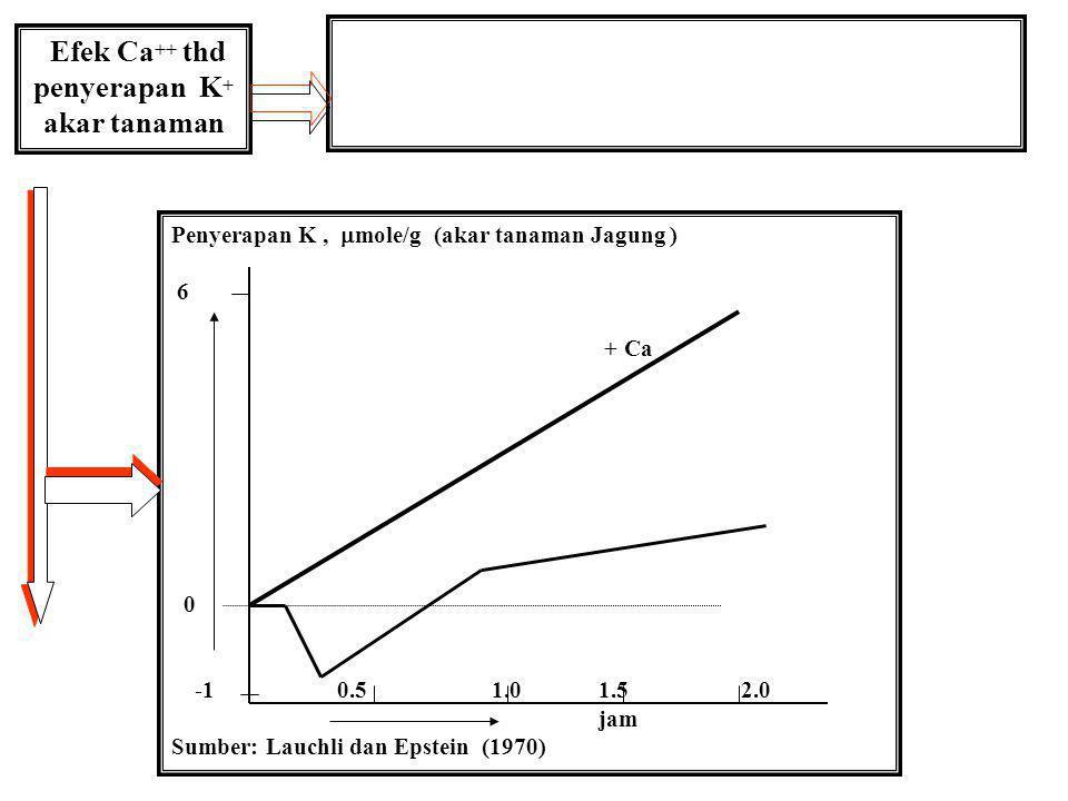 Laju Penyerapan K vs Konsentrasi K+ larutan Laju penyerapan K+, mole/g/jam (akar tanaman barley) 10.0 0.050.100.15 0.20 Konsentrasi K+ larutan tanah ( mM) Sumber: Epstein (1972)