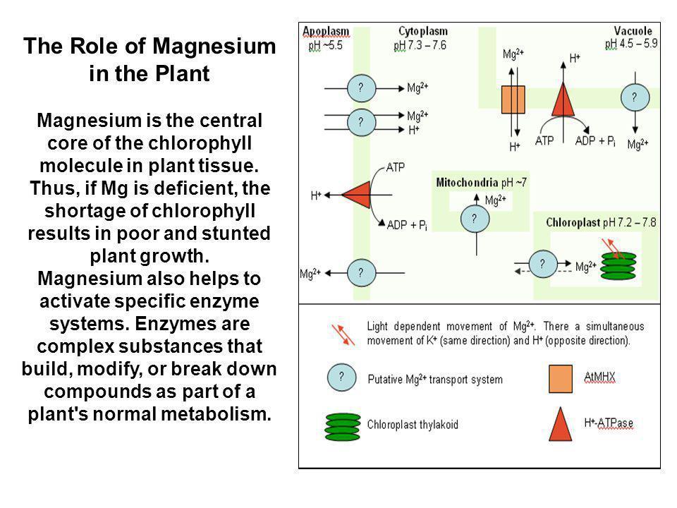 Some Mg fertilizer sources NameFormula%Mg Epsom saltsMgSO 4 ·7H 2 O10 Potassium-Magnesium Sulfate K 2 SO 4 ·2MgSO 4 11 Magnesium Oxide/Magnesia* MgO55 Mg ChelatesVarious3 to 5.5