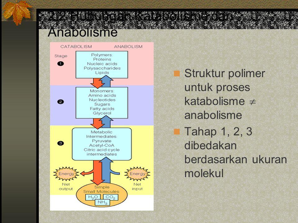 2.2 Hubungan Katabolisme dan Anabolisme Struktur polimer untuk proses katabolisme  anabolisme Tahap 1, 2, 3 dibedakan berdasarkan ukuran molekul