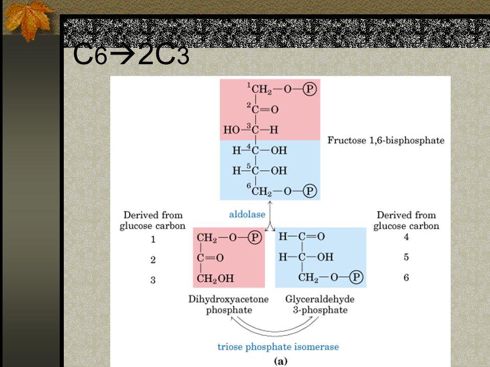 C 6  2C 3