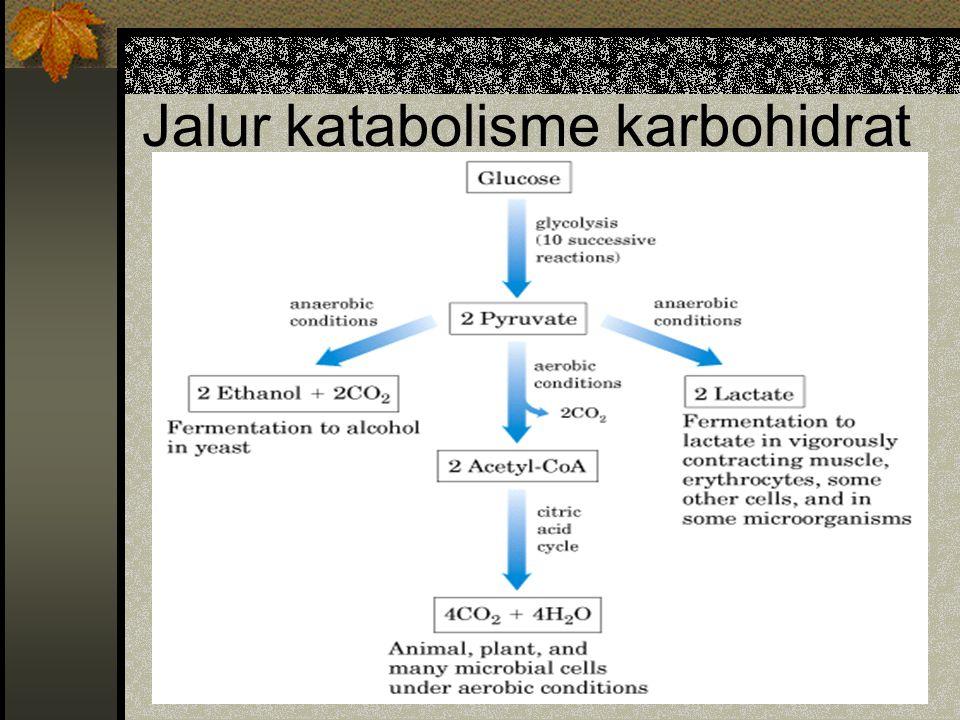 Jalur katabolisme karbohidrat