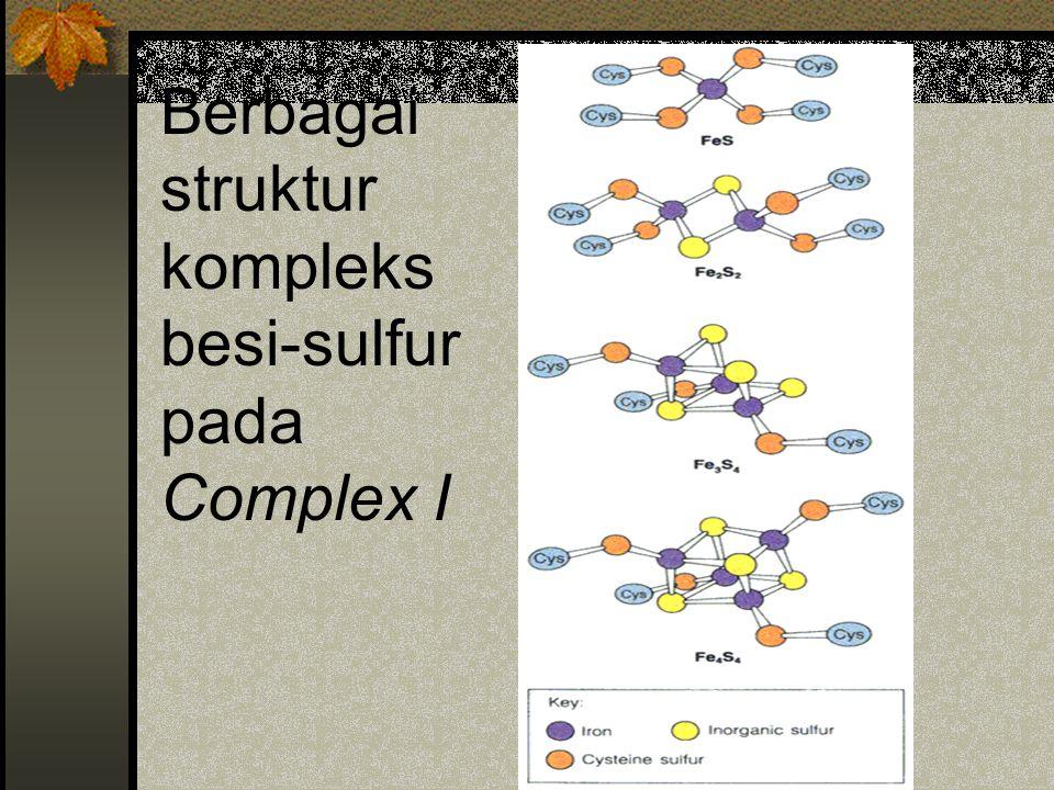 Berbagai struktur kompleks besi-sulfur pada Complex I