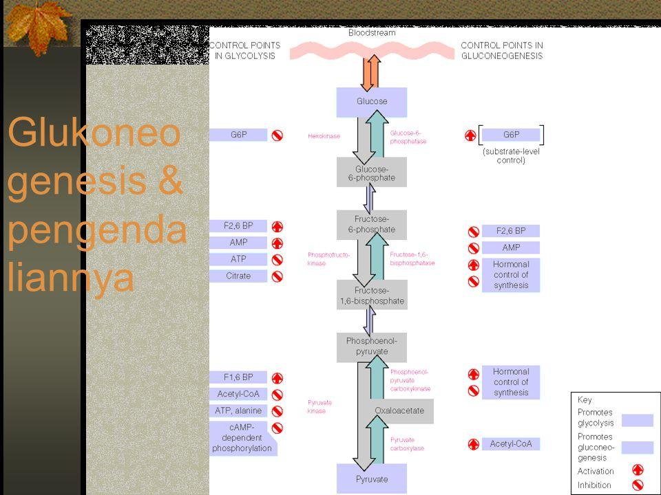 Glukoneo genesis & pengenda liannya