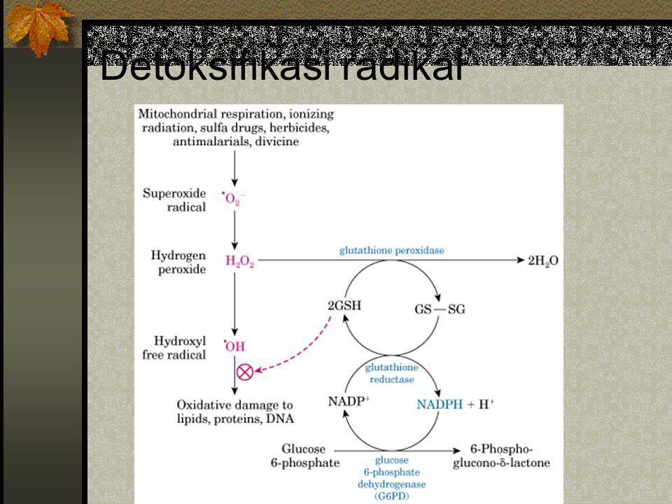 Detoksifikasi radikal