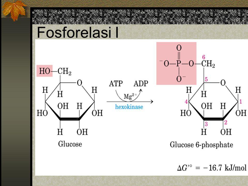 Fosforelasi I