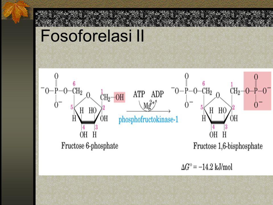 Fosoforelasi II