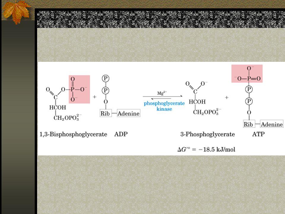 Jaringan tempat sintesis dan degradasi glukosa sintesis