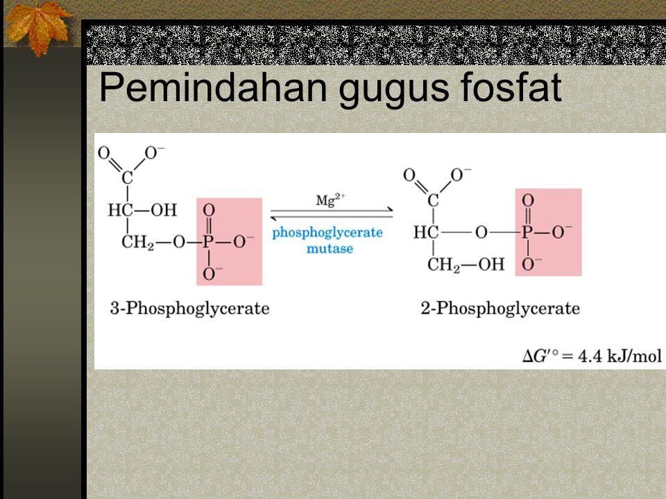 Hubungan glikolisis & glukoneo- genesis glukoneo- genesis