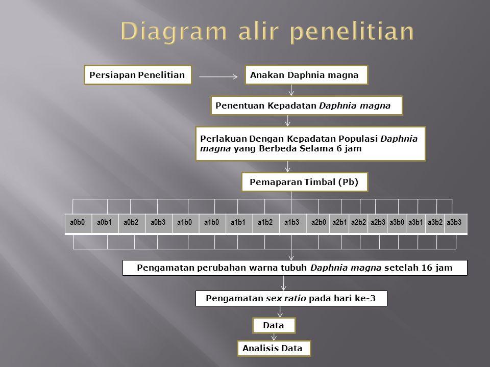 Persiapan PenelitianAnakan Daphnia magna Penentuan Kepadatan Daphnia magna Perlakuan Dengan Kepadatan Populasi Daphnia magna yang Berbeda Selama 6 jam Pemaparan Timbal (Pb) a0b0a0b1a0b2a0b3a1b0 a1b1a1b2a1b3a2b0 a2b1 a2b2 a2b3 a3b0 a3b1 a3b2 a3b3 Pengamatan perubahan warna tubuh Daphnia magna setelah 16 jam Pengamatan sex ratio pada hari ke-3 Data Analisis Data