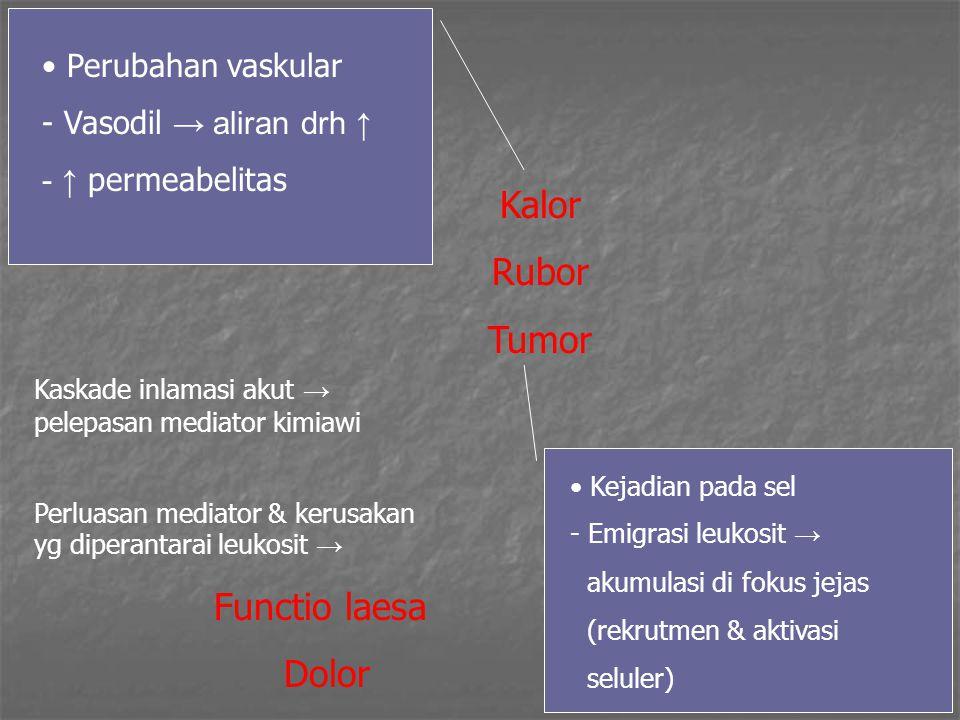 14 Kalor Rubor Tumor Perubahan vaskular - Vasodil → aliran drh ↑ - ↑ permeabelitas Kejadian pada sel - Emigrasi leukosit → akumulasi di fokus jejas (r