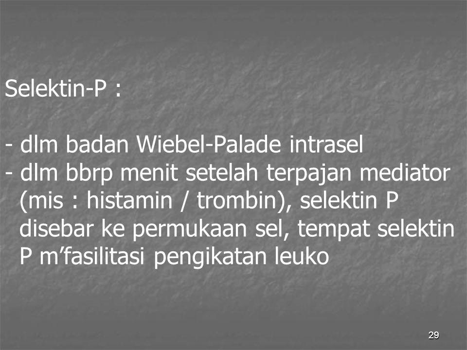 29 Selektin-P : - dlm badan Wiebel-Palade intrasel - dlm bbrp menit setelah terpajan mediator (mis : histamin / trombin), selektin P disebar ke permuk