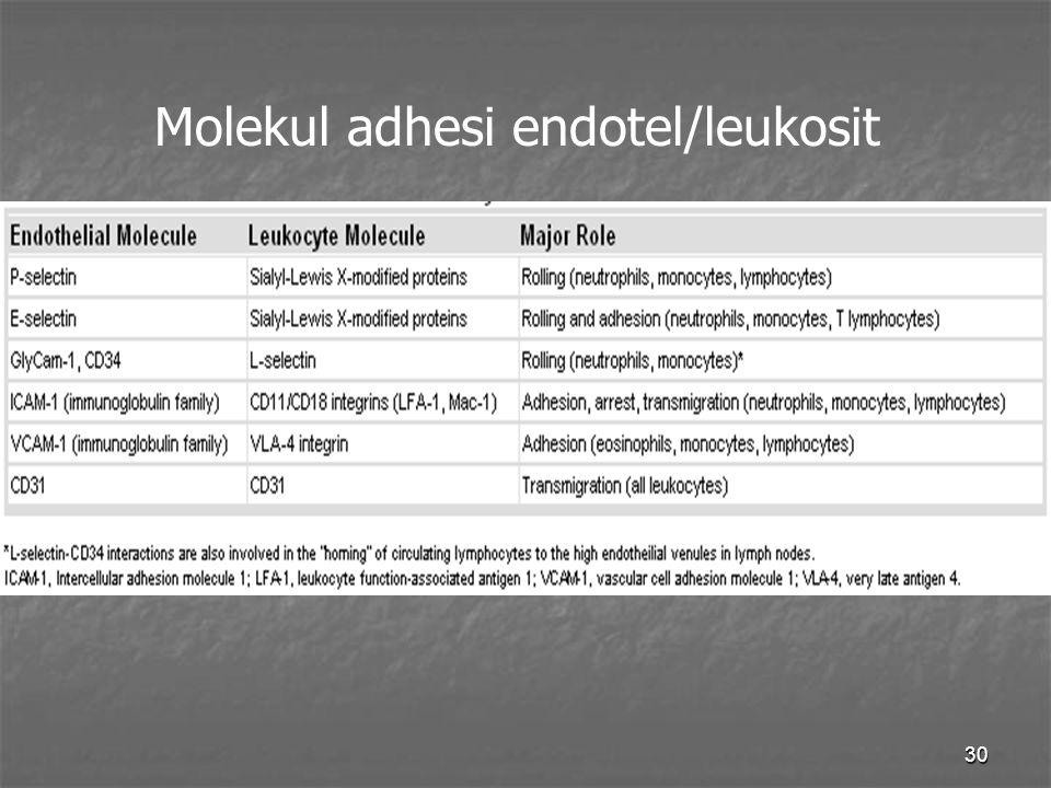 30 Molekul adhesi endotel/leukosit