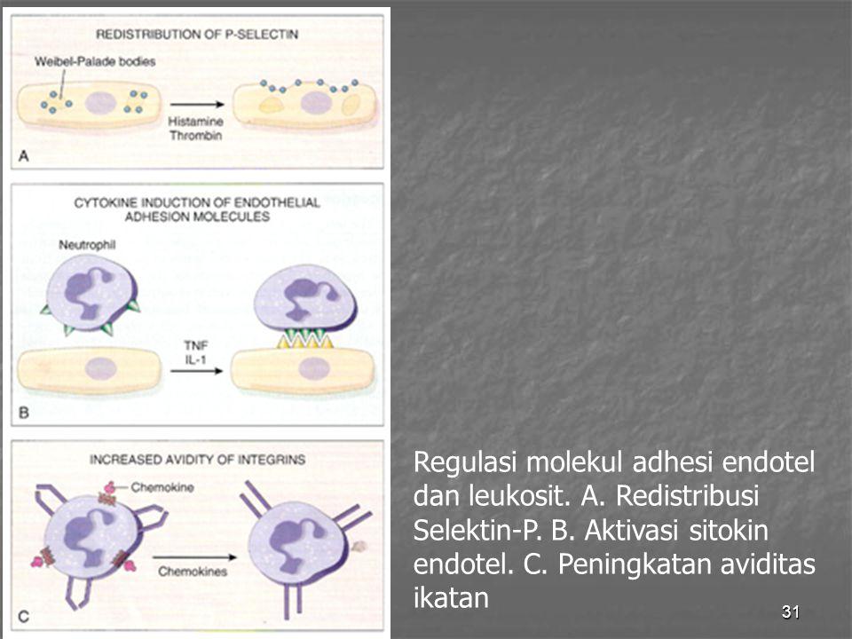 31 Regulasi molekul adhesi endotel dan leukosit. A. Redistribusi Selektin-P. B. Aktivasi sitokin endotel. C. Peningkatan aviditas ikatan