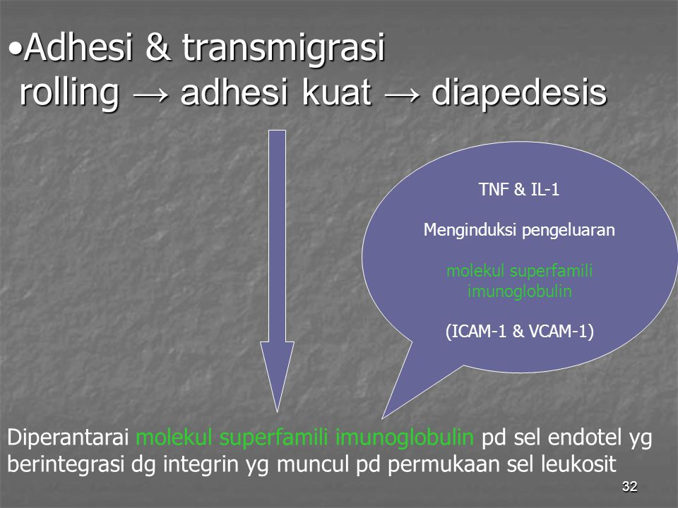 32 Adhesi & transmigrasi rolling → adhesi kuat → diapedesisAdhesi & transmigrasi rolling → adhesi kuat → diapedesis Diperantarai molekul superfamili i