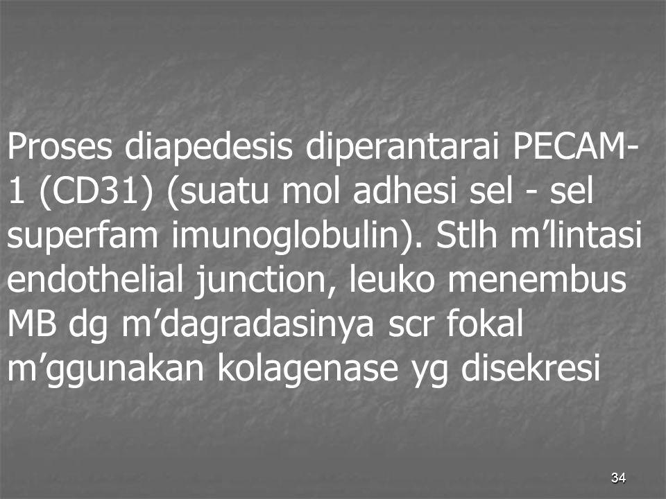 34 Proses diapedesis diperantarai PECAM- 1 (CD31) (suatu mol adhesi sel - sel superfam imunoglobulin). Stlh m'lintasi endothelial junction, leuko mene