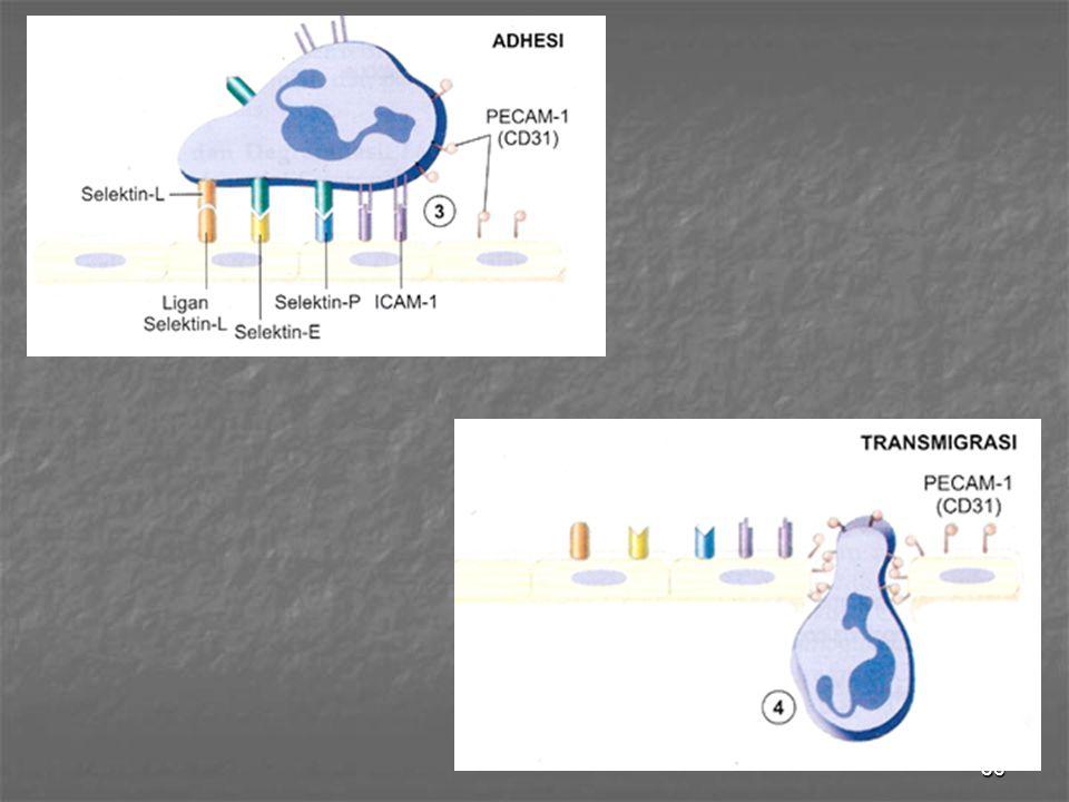 37 Kemotaksis & aktivasi setelah ekstravasasi → kemotaksis Zat yg dpt b'sifat kemotaktik thdp leuko 1.