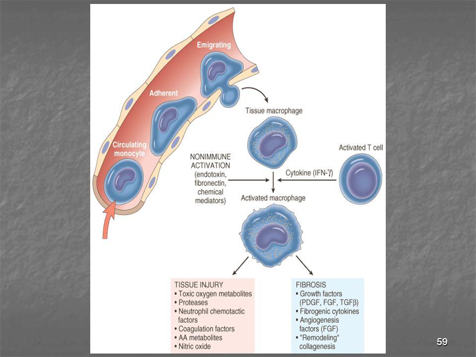60 Limfosit T & B Limfosit T & B - Dimobilisasi oleh adanya rangsang imun spesifik (infeksi) & pd inflamasi yg spesifik (infeksi) & pd inflamasi yg diperantarai nonimun (infark / trauma jar) diperantarai nonimun (infark / trauma jar) - Limfosit T mempunyai hub timbal balik dg makrofag pd inflamasi kronik makrofag pd inflamasi kronik - Limfosit B  sel plasma  Ab utk melawan Ag Eosinofil Eosinofil - Lebih banyak pd rx imunitas yg diperantarai IgE & pd infeksi parasit diperantarai IgE & pd infeksi parasit