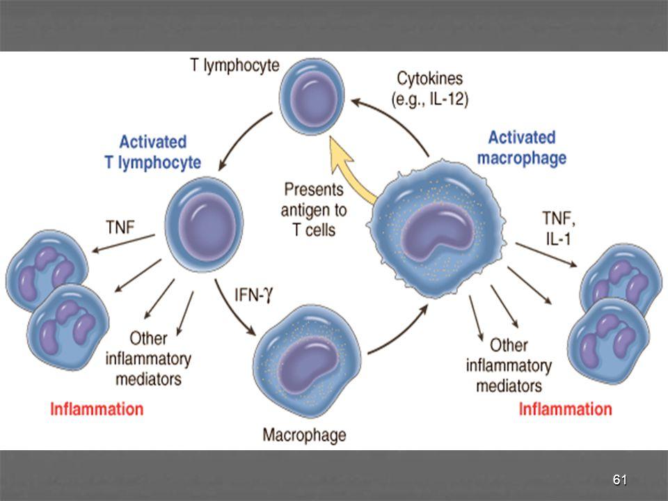 62 Sel Mast Sel Mast - Terdistribusi pd jar penyambung, dapat berperan pd radang akut maupun kronik berperan pd radang akut maupun kronik - Menghasilkan sitokin yg berperan dalam fibrosis fibrosis