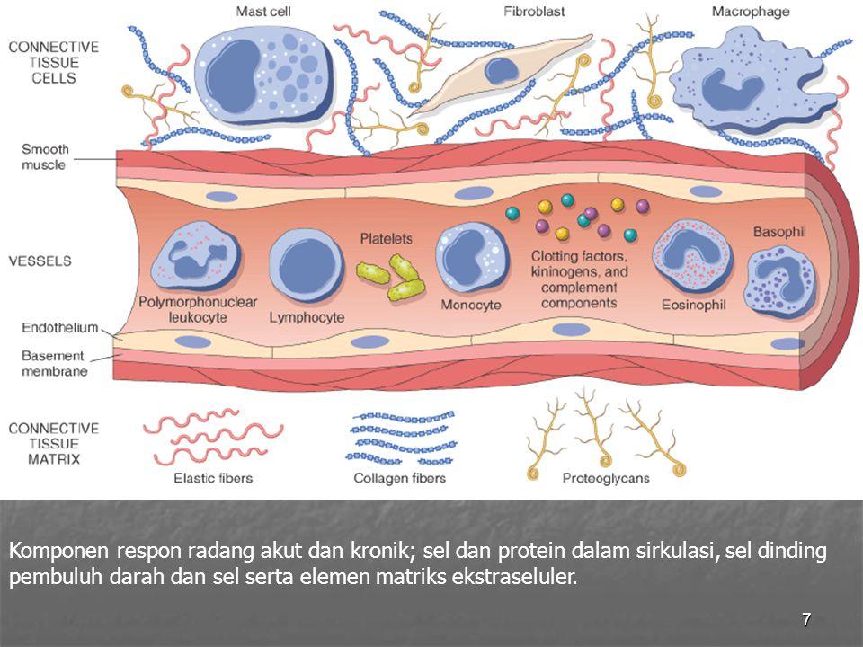 7 Komponen respon radang akut dan kronik; sel dan protein dalam sirkulasi, sel dinding pembuluh darah dan sel serta elemen matriks ekstraseluler.