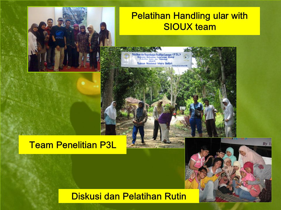 Pelatihan Handling ular with SIOUX team Diskusi dan Pelatihan Rutin Team Penelitian P3L