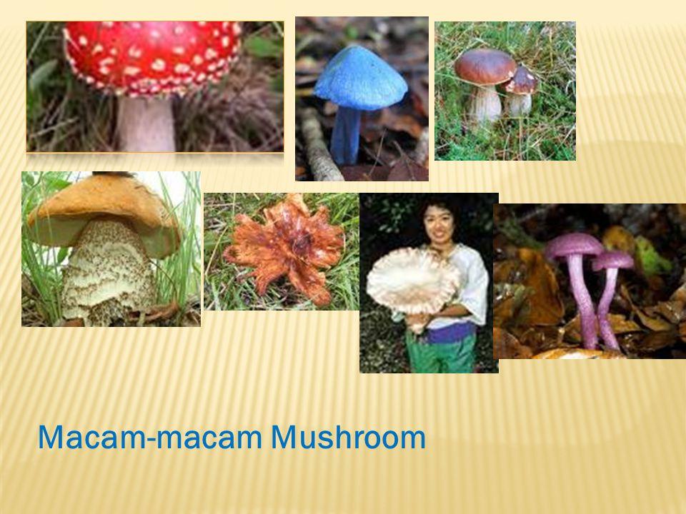 Macam-macam Mushroom