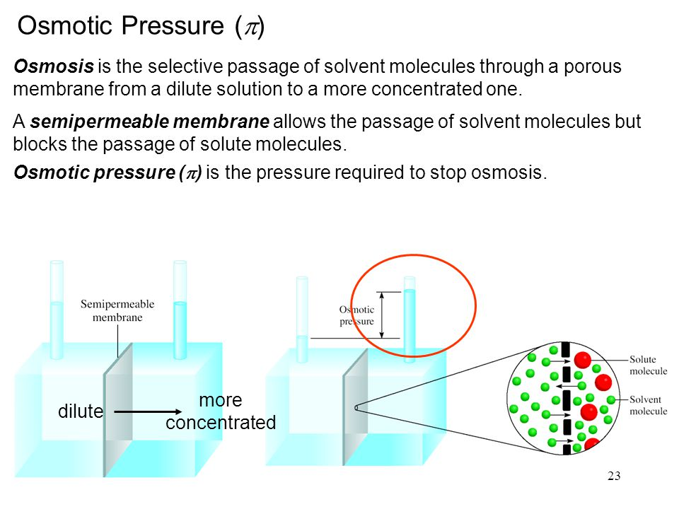 23 Osmotic Pressure (  ) Osmosis is the selective passage of solvent molecules through a porous membrane from a dilute solution to a more concentrated one.