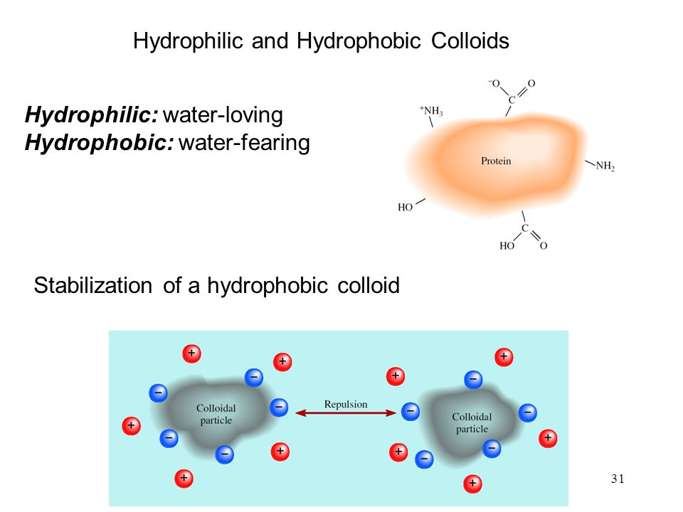31 Hydrophilic and Hydrophobic Colloids Hydrophilic: water-loving Hydrophobic: water-fearing Stabilization of a hydrophobic colloid