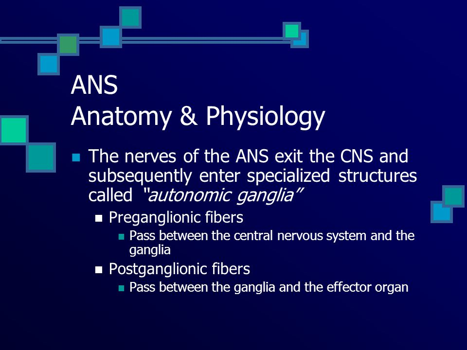 "Autonomic Nervous System Characteristics ""Fight or Flight"" ""Feed or Breed"""