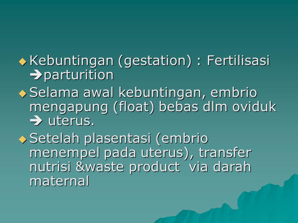  Kebuntingan (gestation) : Fertilisasi  parturition  Selama awal kebuntingan, embrio mengapung (float) bebas dlm oviduk  uterus.  Setelah plasent