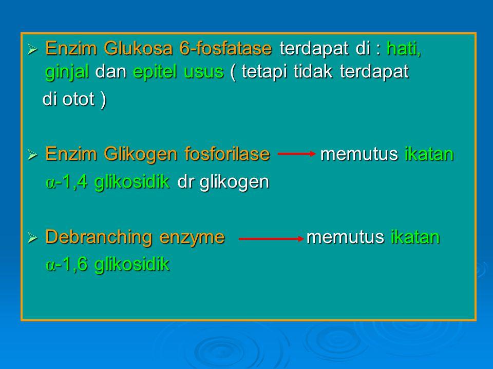 Enzim Glukosa 6-fosfatase terdapat di : hati, ginjal dan epitel usus ( tetapi tidak terdapat di otot ) di otot )  Enzim Glikogen fosforilase memutu
