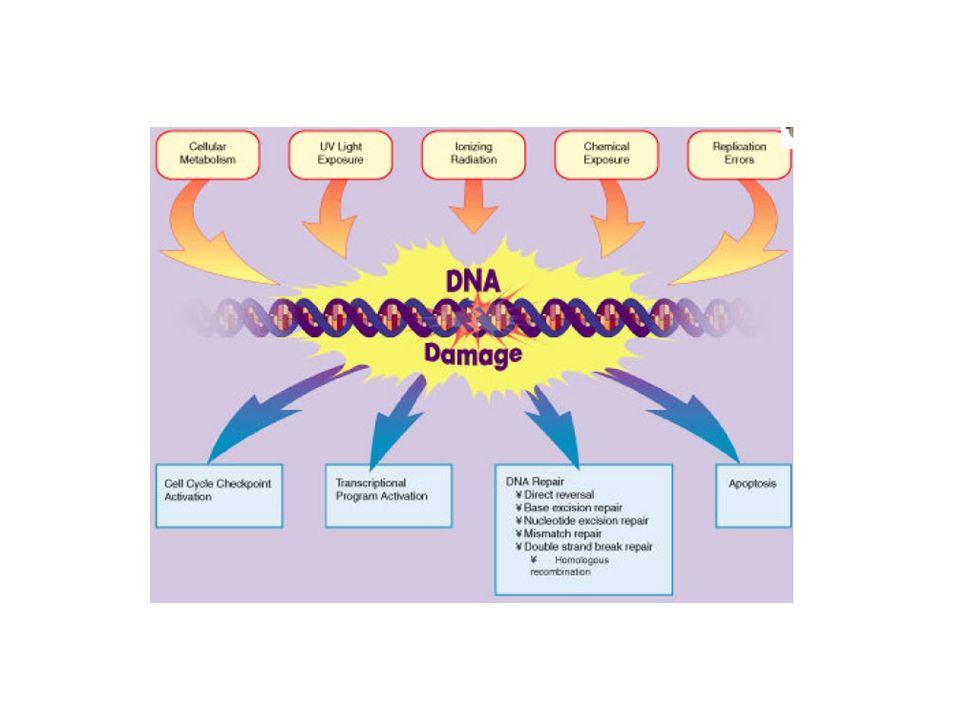 LINGKUNGAN UDARA AGEN KIMIA YANG PALING BANYAK : KARBON MONOXIDA (CO) SULFUR DIOXIDA (SO 2 ) NITROGEN OXIDA (NO) HIDROKARBON (CH 2 O) PENGARUH PADA : SISTEM PERNAPASAN, KULIT, SELAPUT LENDIR DAN SISTEMIK (MELALUI PEMB.DARAH)