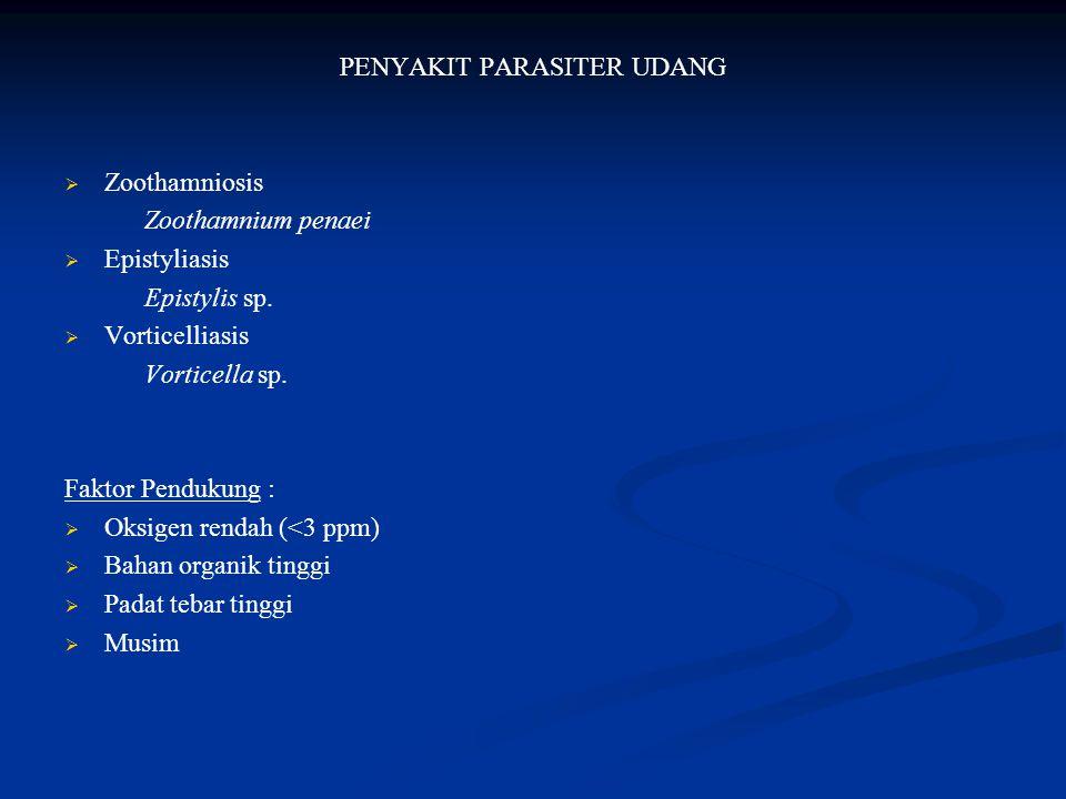PENYAKIT PARASITER UDANG   Zoothamniosis Zoothamnium penaei   Epistyliasis Epistylis sp.   Vorticelliasis Vorticella sp. Faktor Pendukung :  