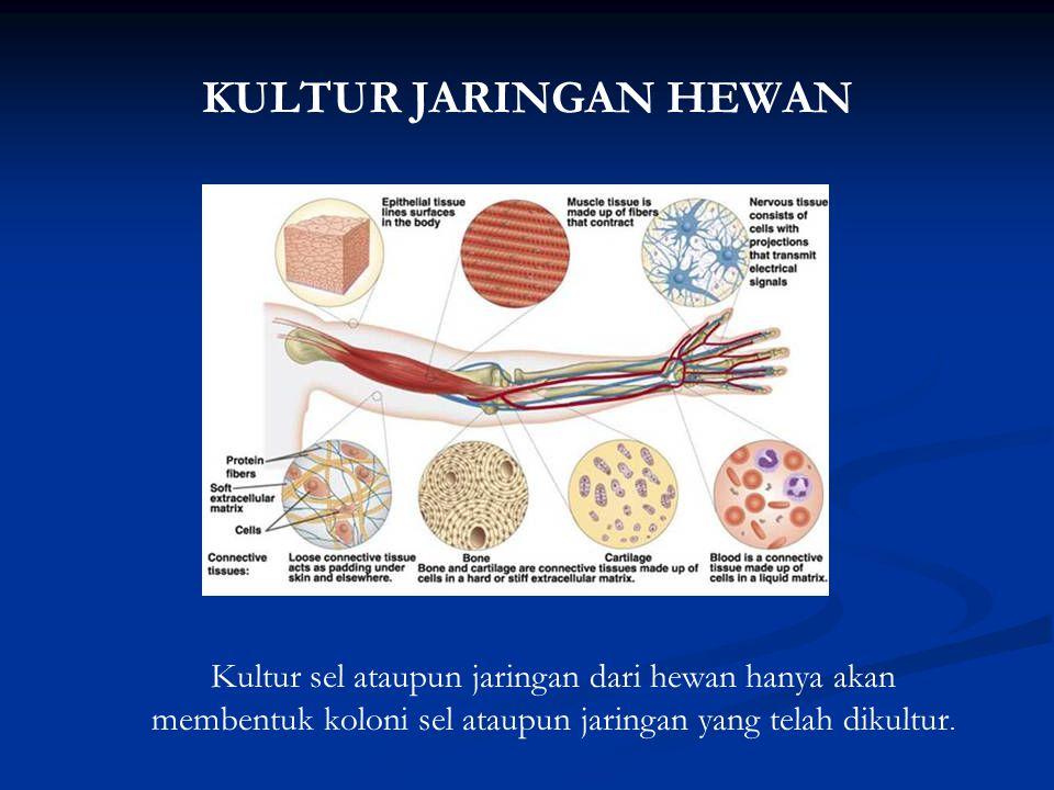 KULTUR JARINGAN HEWAN Kultur sel ataupun jaringan dari hewan hanya akan membentuk koloni sel ataupun jaringan yang telah dikultur.