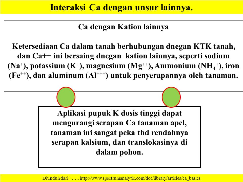 Faktor ketersediaan Ca dalam tanah. Alkaline sodic soil (high sodium content): Excess sodium (Na) in the soil competes with Ca, and other cations to r