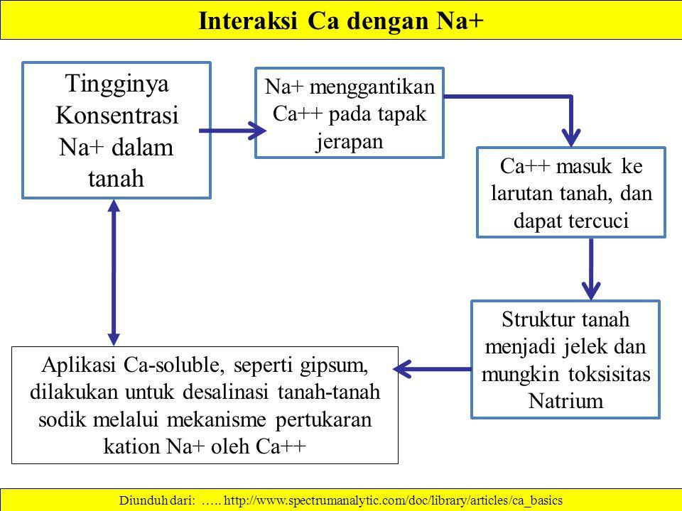Interaksi Ca dengan Na+ Aplikasi Ca-soluble, seperti gipsum, dilakukan untuk desalinasi tanah-tanah sodik melalui mekanisme pertukaran kation Na+ oleh Ca++ Diunduh dari: …..