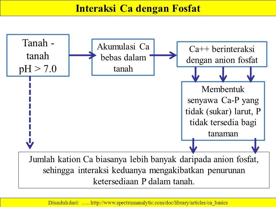 Interaksi Ca dengan Fosfat Jumlah kation Ca biasanya lebih banyak daripada anion fosfat, sehingga interaksi keduanya mengakibatkan penurunan ketersediaan P dalam tanah.