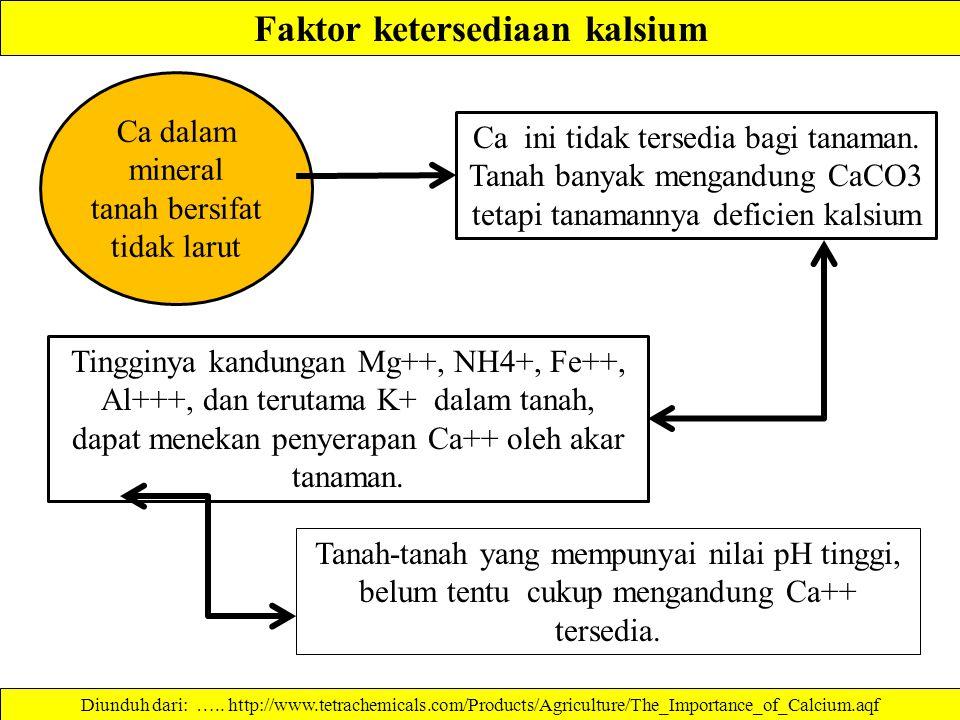 Faktor ketersediaan kalsium Tanah-tanah yang mempunyai nilai pH tinggi, belum tentu cukup mengandung Ca++ tersedia.