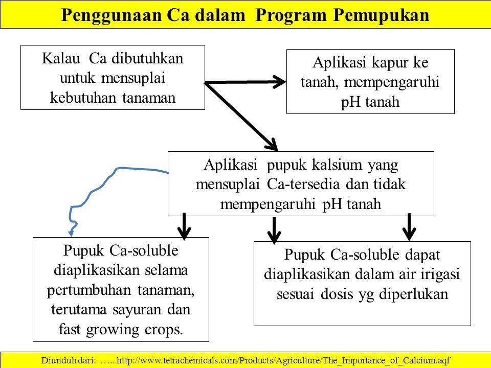Penggunaan Ca dalam Program Pemupukan Pupuk Ca-soluble diaplikasikan selama pertumbuhan tanaman, terutama sayuran dan fast growing crops.