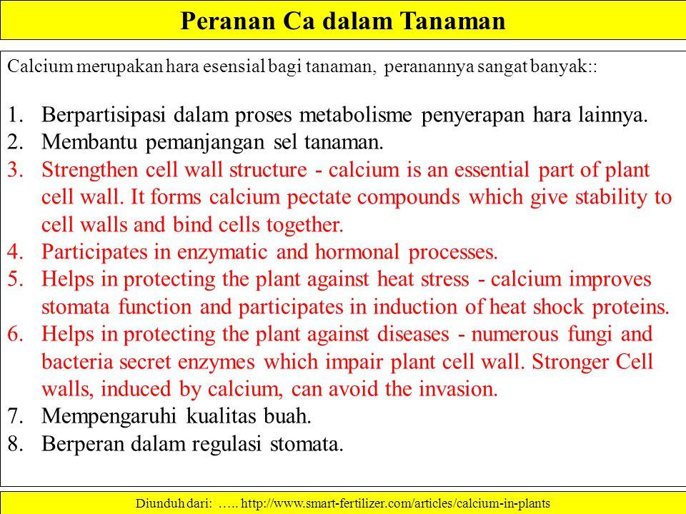 Peranan Ca dalam Tanaman Calcium merupakan hara esensial bagi tanaman, peranannya sangat banyak:: 1.Berpartisipasi dalam proses metabolisme penyerapan hara lainnya.