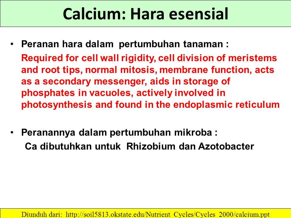 Calcium: Hara esensial Peranan hara dalam pertumbuhan tanaman : Required for cell wall rigidity, cell division of meristems and root tips, normal mitosis, membrane function, acts as a secondary messenger, aids in storage of phosphates in vacuoles, actively involved in photosynthesis and found in the endoplasmic reticulum Peranannya dalam pertumbuhan mikroba : Ca dibutuhkan untuk Rhizobium dan Azotobacter Diunduh dari: http://soil5813.okstate.edu/Nutrient_Cycles/Cycles_2000/calcium.ppt