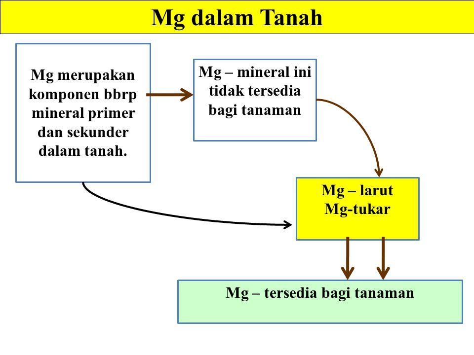 Mg dalam Tanah Mg merupakan komponen bbrp mineral primer dan sekunder dalam tanah.