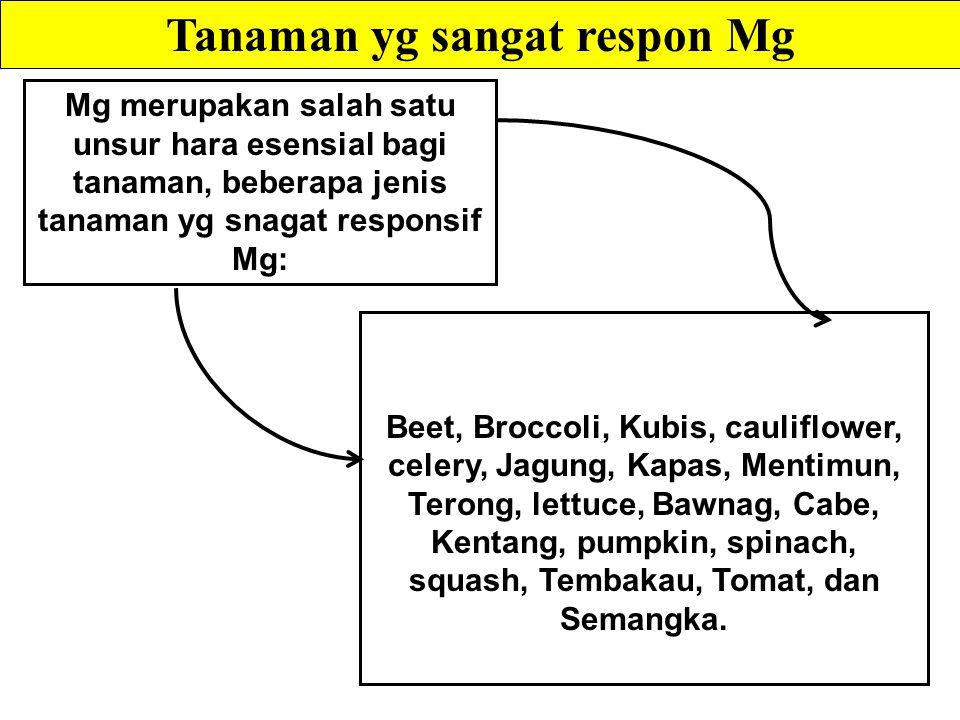 Mg merupakan salah satu unsur hara esensial bagi tanaman, beberapa jenis tanaman yg snagat responsif Mg: Tanaman yg sangat respon Mg Beet, Broccoli, Kubis, cauliflower, celery, Jagung, Kapas, Mentimun, Terong, lettuce, Bawnag, Cabe, Kentang, pumpkin, spinach, squash, Tembakau, Tomat, dan Semangka.