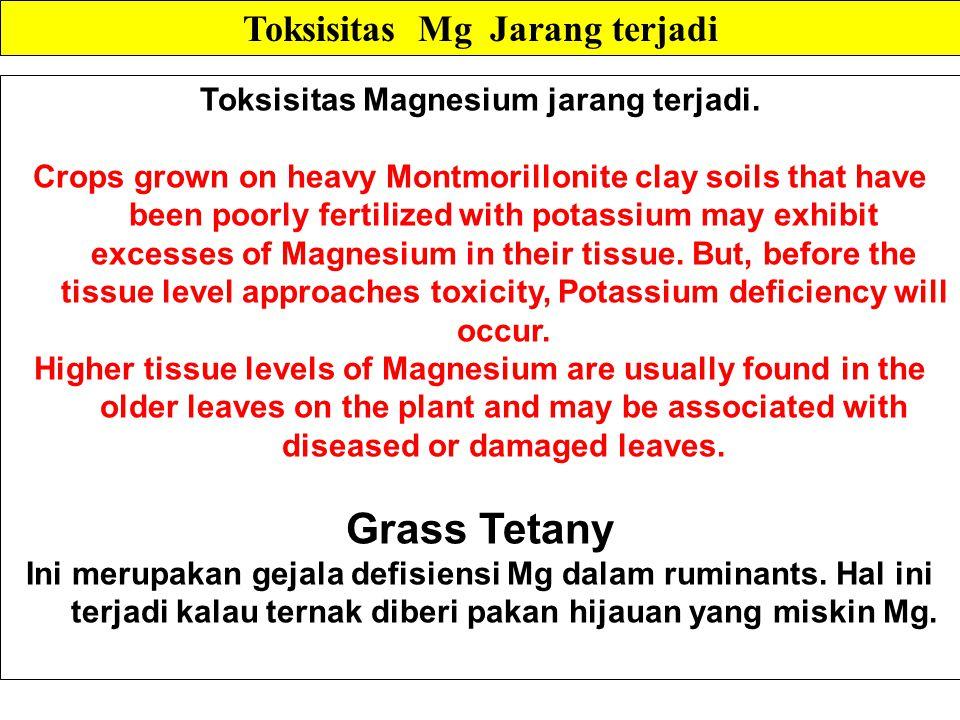 Toksisitas Magnesium jarang terjadi.