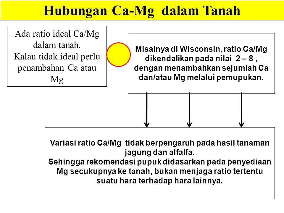 Variasi ratio Ca/Mg tidak berpengaruh pada hasil tanaman jagung dan alfalfa.