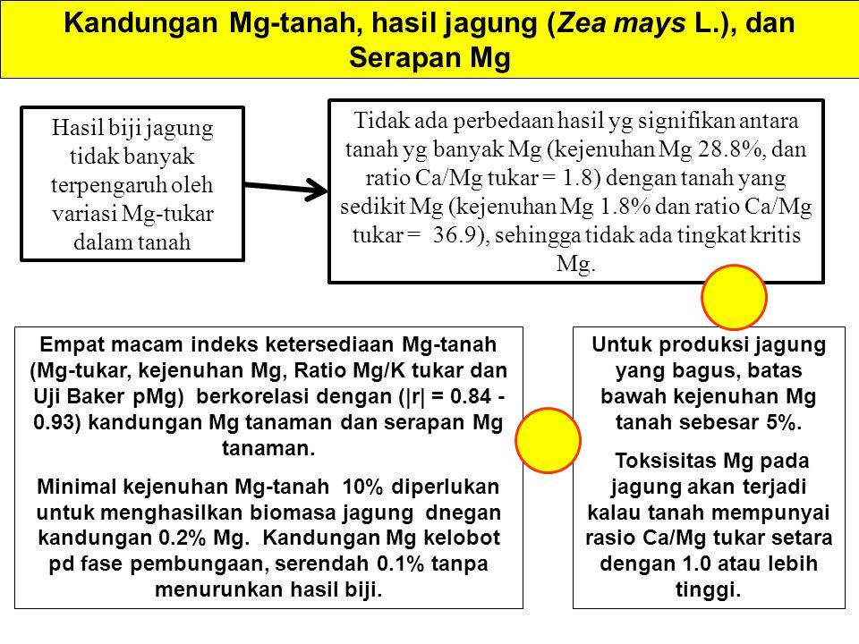 Kandungan Mg-tanah, hasil jagung (Zea mays L.), dan Serapan Mg Empat macam indeks ketersediaan Mg-tanah (Mg-tukar, kejenuhan Mg, Ratio Mg/K tukar dan Uji Baker pMg) berkorelasi dengan ( r  = 0.84 - 0.93) kandungan Mg tanaman dan serapan Mg tanaman.