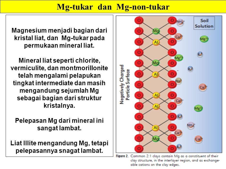 Magnesium menjadi bagian dari kristal liat, dan Mg-tukar pada permukaan mineral liat.
