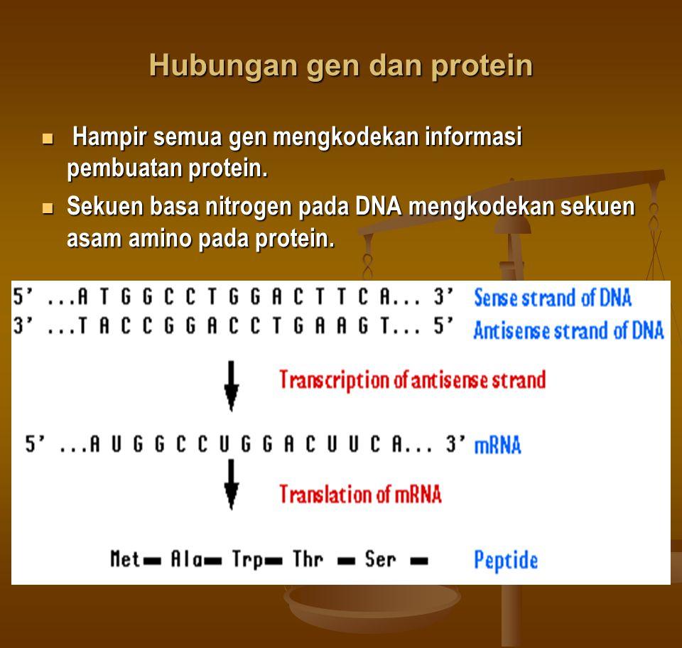 Hubungan gen dan protein Hampir semua gen mengkodekan informasi pembuatan protein.
