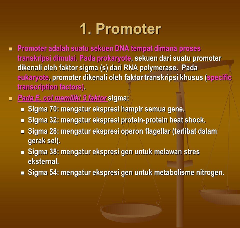 1.Promoter Promoter adalah suatu sekuen DNA tempat dimana proses transkripsi dimulai.